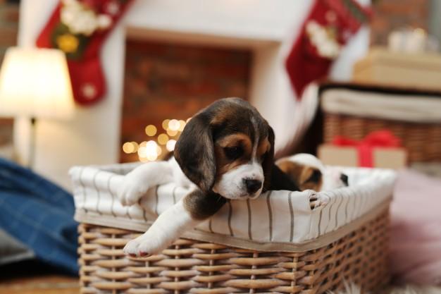 dogs-basket_144627-43624