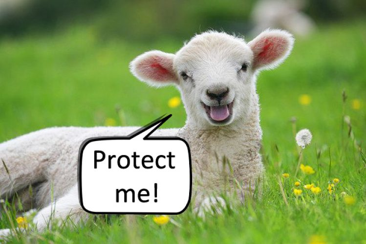save the sheeps