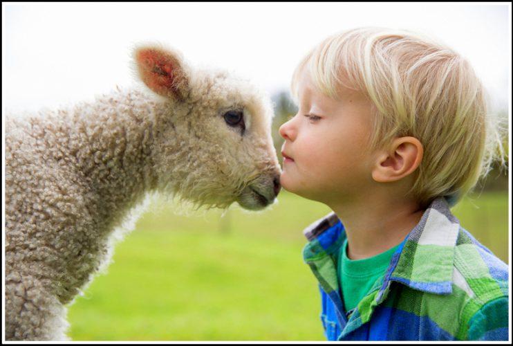 Lamb-and-Boy