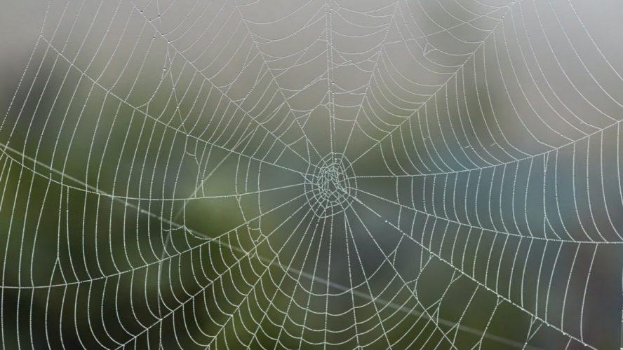 Vegan-Spider-Silk