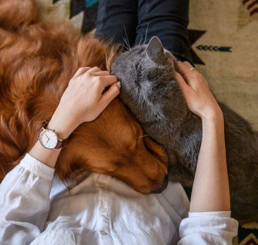 νομοσχέδιο για ζώα συντροφιάς και αδέσποτα
