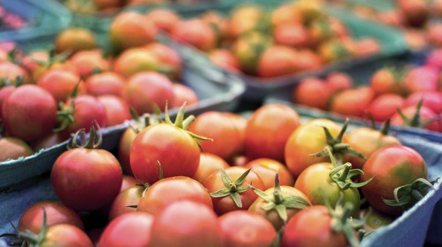 tomato_agrotes